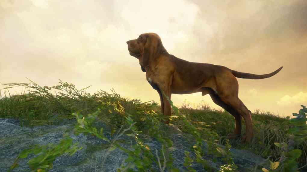 COTW Bloodhound PR HD 2 1