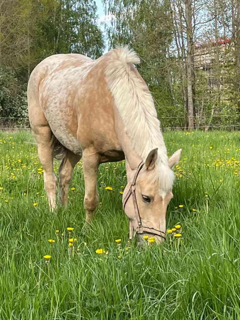 valheim pony