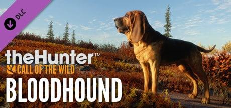 cotw Bloodhound